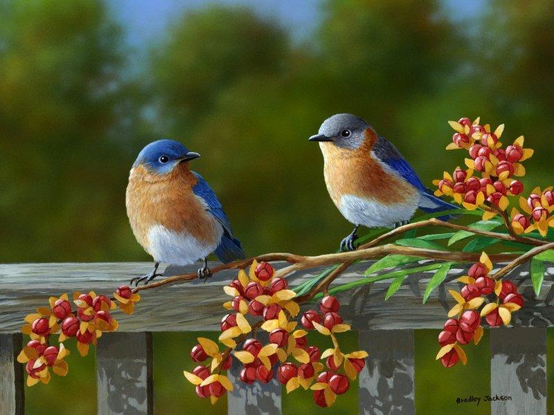 Картинки с птицами и цветами 8
