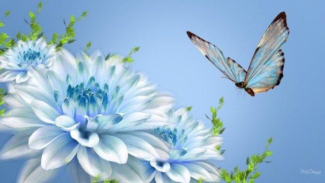заставка на телефон бабочка порхает крыльями анимация № 458  скачать