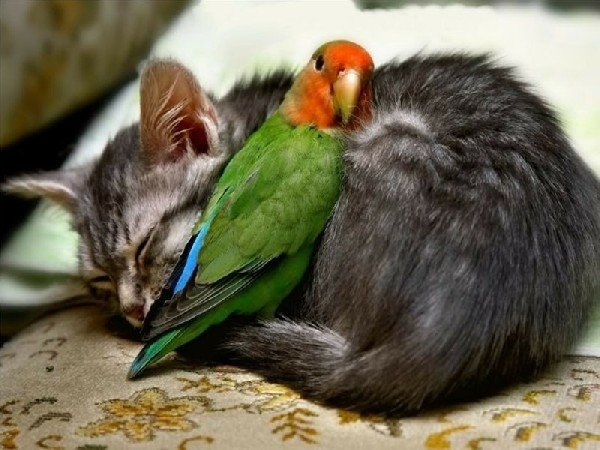 I životinje odmaraju U2sb07w2myk