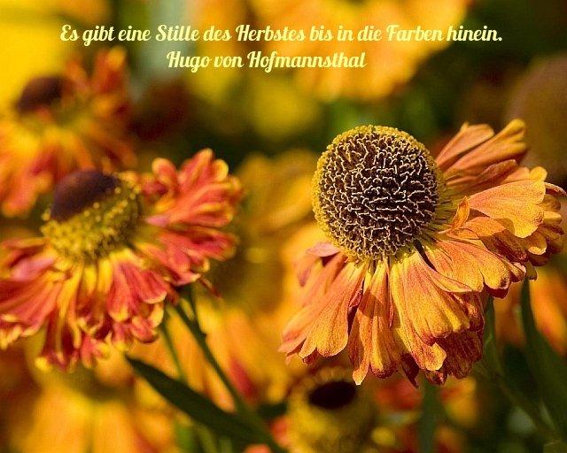liebe zitate in deutsch