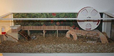 Hamstermusterbecken mit Dekoration