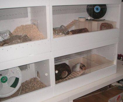 Hamster Terrarium